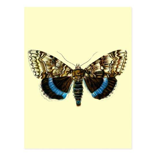 Catocala fraxini postcard