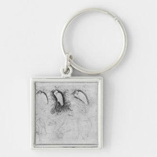 Catorce egrets, el álbum de Vallardi Llavero