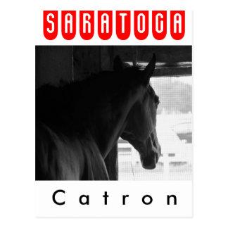 Catron Postcard