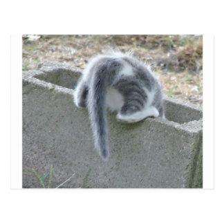 cats 020 postcard