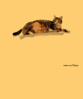 Cats 30 tee shirts
