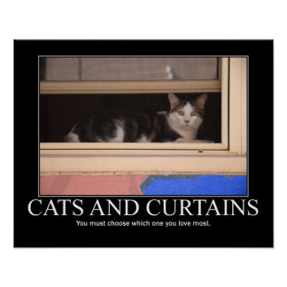 Cats and Curtains Artwork Poster