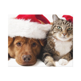 Cats and dogs - Christmas cat - christmas dog Canvas Print