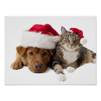 Cats and dogs - Christmas cat - christmas dog Poster