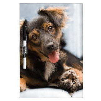 Cats and dogs - funny dog - Funny cats Dry Erase Board