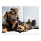Cats and dogs - funny dog - Funny cats Postcard