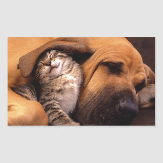 Cats and Dogs Rectangular Sticker