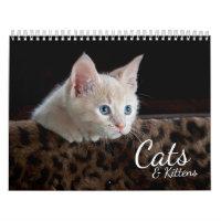 Cats and Kittens 2021 Pet Photo Calendar