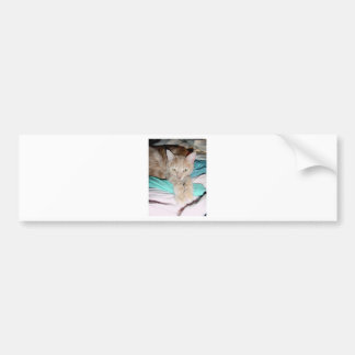 CATS AND MORE CATS BUMPER STICKER
