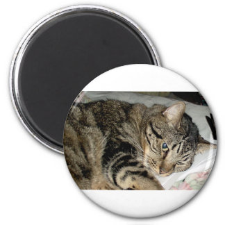 CATS AND MORE CATS MAGNET