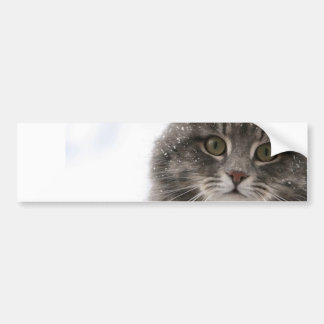 cats_and_snow15 snowfall pets animals furry cat car bumper sticker