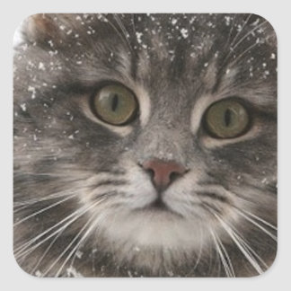 cats_and_snow15 snowfall pets animals furry cat stickers