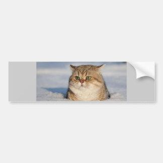 cats_and_snow7 bumper sticker