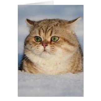 cats_and_snow7 card