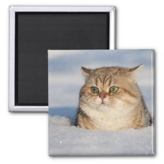 cats_and_snow7 magnet