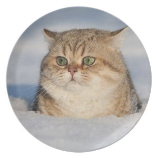 cats_and_snow7 melamine plate