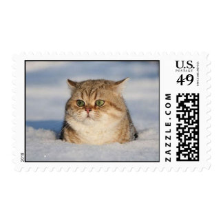 cats_and_snow7 postage