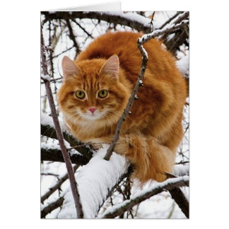 cats_and_snow_ (14) card