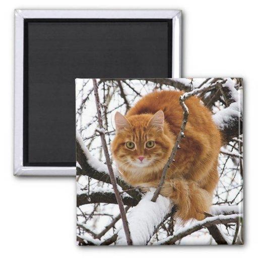 cats_and_snow_ (14) imán cuadrado