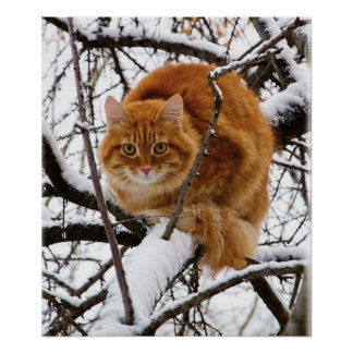 cats_and_snow_ (14) posters