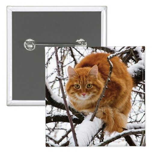 cats_and_snow_ (14) pin