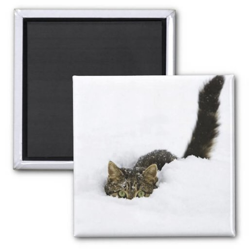 cats_and_snow_ (4) 2 inch square magnet