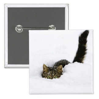 cats_and_snow_ (4) button