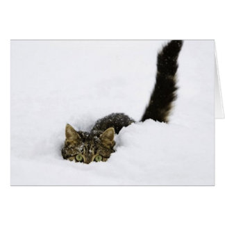 cats_and_snow_ (4) greeting card