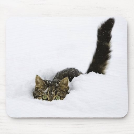 cats_and_snow_ (4) mousepad