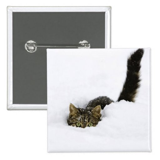 cats_and_snow_ (4) pinback buttons