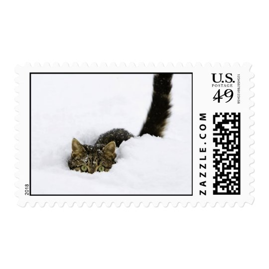 cats_and_snow_ (4) postage