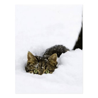 cats_and_snow_ (4) postal