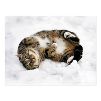 cats_and_snow_ (5) cute pets animals kittens funny postcard