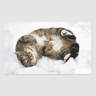 cats_and_snow_ (5) cute pets animals kittens funny rectangular sticker