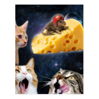 Cats and the mouse on the cheese postcard