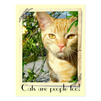 Cats Are People Too Postcard! Postcard