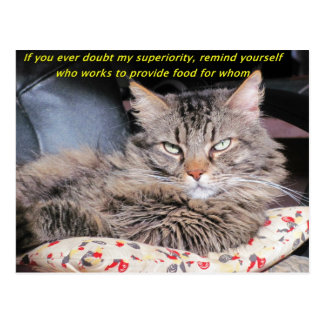 Cats are superior post cards