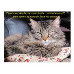 Cats are superior postcard