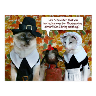 Cats as Pilgrims with Turkey Thanksgiving Card
