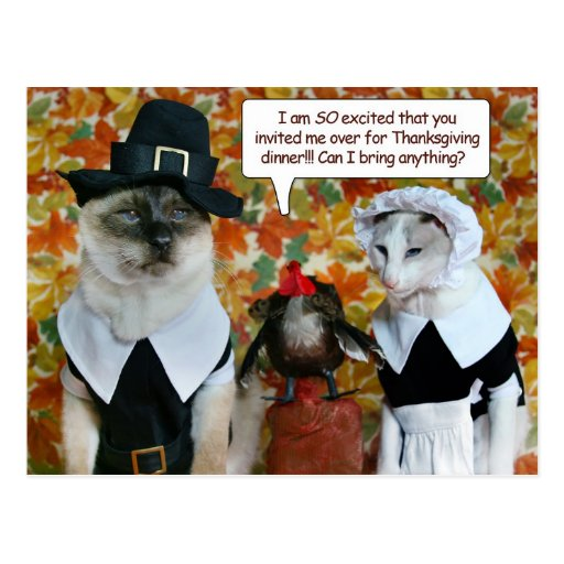 Cats as Pilgrims with Turkey Thanksgiving Card Postcards