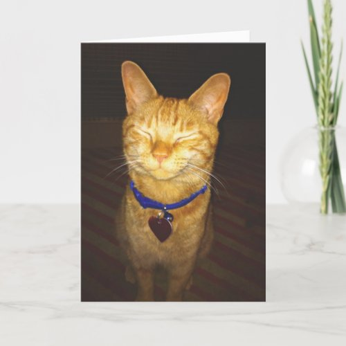 Cats Birthday Wishes Greeting Card