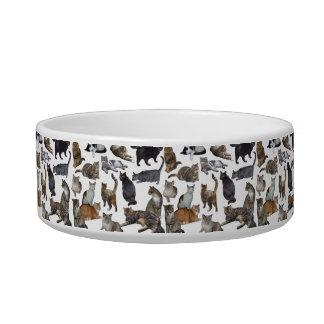 Cats, cats, cats... bowl