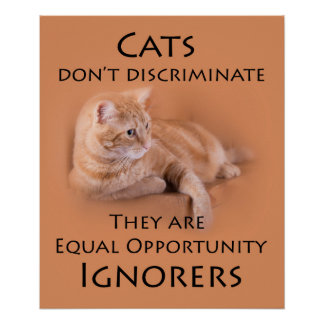 Cats don't discriminate poster