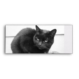 Cats Envelope