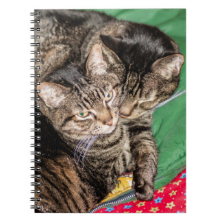 Cats - Everyday - Holidays - Christmas Notebook