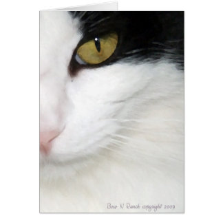 Cats Eye Greeting Cards