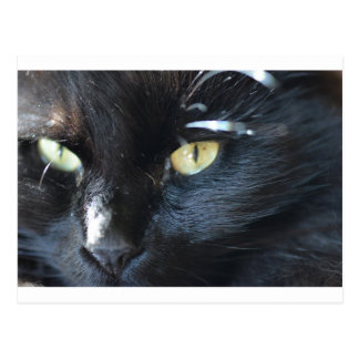 Cat's Eyeing You Postcard