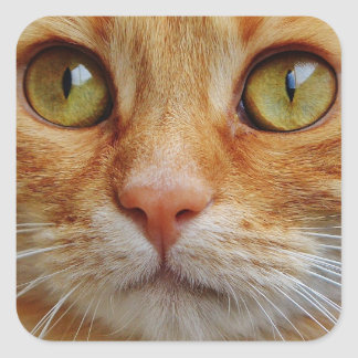Cat's eyes square sticker