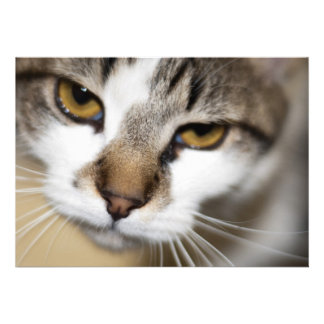 Cat's face personalized invitation