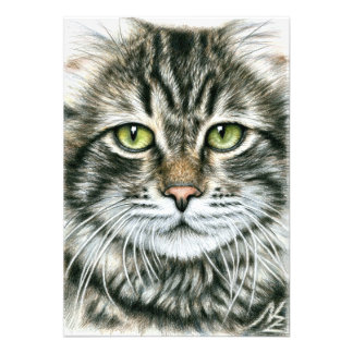 Cats Face Photographic Print
